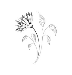 Drawing flowers hand-drawn chamomiles daisies vector