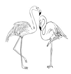 Flamingo doodle style isolated on white vector