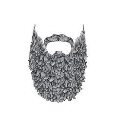 long beard vector image