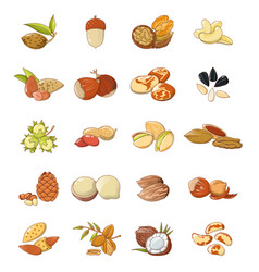 nut types food icons set cartoon style vector image