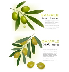 olive branchs vector image