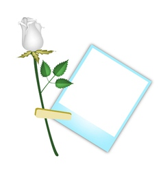 A Beautiful White Rose with Blank Photos vector image vector image