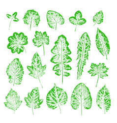 set of leaf imprints collection of green leaves vector image