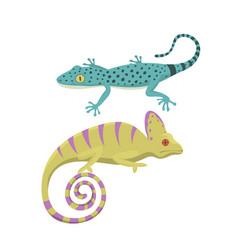 Different kind of lizard reptile isolated vector
