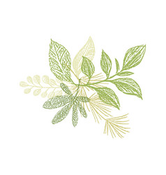 floral hand drawn composition plant leaves vector image