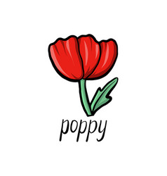 Flower of poppy vector