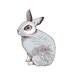 hand drawn bunny vector image