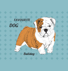 puppy english bulldog vector image