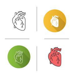 Human heart anatomy icon vector