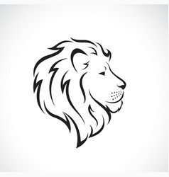 Male lion head design on a white background wild vector