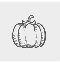 Squash sketch icon vector