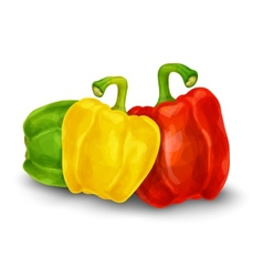Pepper isolated on white vector image vector image
