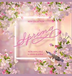 spring cherry blossom vector image