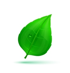 Spring green leaf with drops of water vector image