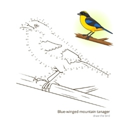 Blue winged mountain tanager draw vector