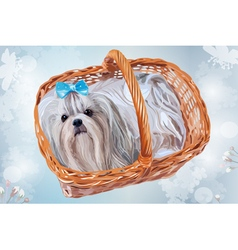 Cute shih tzu dog with blue bow sitting in basket vector