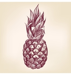 fruit pineappl hand drawn llustration vector image