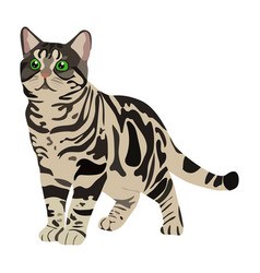 Multicolored cat icon on a white background vector