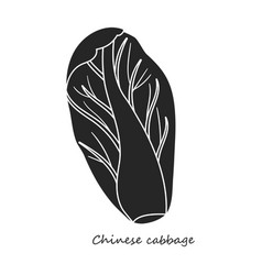 Cabbage chinese iconblacksimple vector