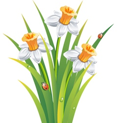 Garden flower vector