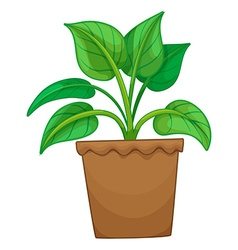 Green plant in the pot vector image