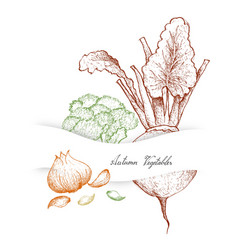 Hand drawn autumn vegetables of broccoli beetroot vector