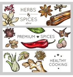 Spice And Herb Banner Set vector