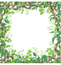 green leaves and liana branches frame vector image vector image