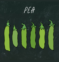 black board green pea pod healthy bio vegetarian vector image