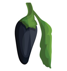 dark blue chilli pepper with green leaf of vector image