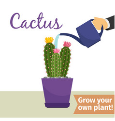 Hand watering cactus plant vector