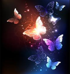 night butterflies vector image