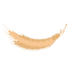 Spikelet of wheat vector