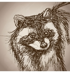 raccoon portrait forest hand drawing vintage vector image vector image