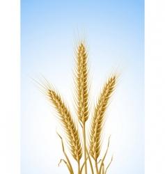 yellow ears of wheat vector image vector image