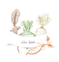 Autumn vegetables of radish rutabaga sweet potat vector