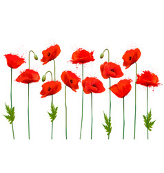 beautiful nature poppy background vector image
