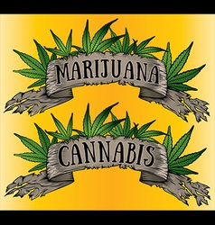 Marijuana cannabis paper parchment design vector