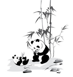 panda and baby eat a bamboo vector image