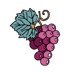 Bunch grapes in doodle style with stroke vector
