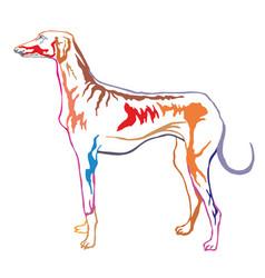colorful decorative standing portrait of azawakh vector image