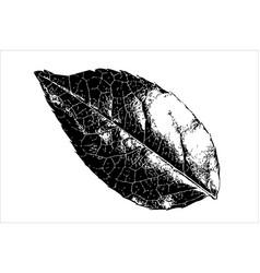 leaf icon isolated on white background vector image