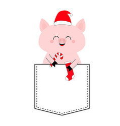 Pig face head in pocket santa hat candy cane vector