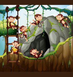 Scene with monkeys playing in the cave vector