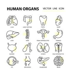 Set modern thin line web icons on medicine human vector