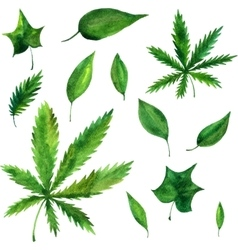 watercolor green leaves vector image vector image