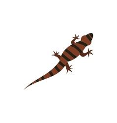 Ambistoma tiger salamander icon flat style vector
