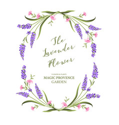 Elegant card with lavender flowers vector