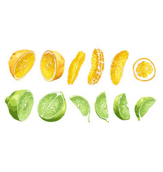 fruit set slices and halves of lime and oranges vector image