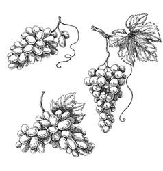 Grape sketch monochrome vector